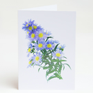 Notelets – Thank You Cards - Michaelmas Daisy - Pack of 5 with Envelopes