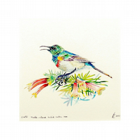 Tropical Bird Original Small Square Watercolour . Modern Botanical Bird Wildlife