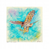 Falcon Original Watercolour. Small Square Bird of Prey Artwork. Hawk Painting