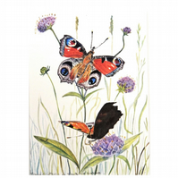 Peacock Butterfly Watercolour Painting. Botanical Butterflies and flowers Art
