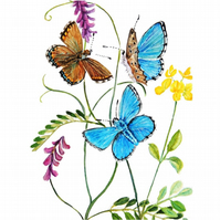 Butterfly Watercolour Painting Adonis Blue Butterflies and Flowers Botanical Art