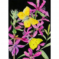 Butterfly Watercolour Painting Brimstone Butterflies and Flowers Botanical Art