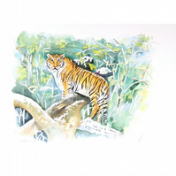 Tiger in the Wild Watercolour Painting .Jungle Animals Fine Art