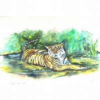 Indian Tiger in the Wild Watercolour Painting .Animals of the Jungle Fine Art