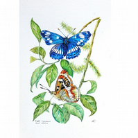 Butterfly Watercolour Painting Purple Emperor Small Artwork