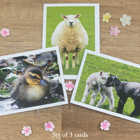 Spring Animal cards, Selection of cards, Nature photography, Blank greeting card