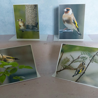 Set of 4 Goldfinch A6 Eco Greetings Cards
