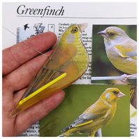 One fused glass greenfinch, British garden bird