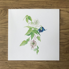 Pack of 5 Alpina Clematis Watercolour Print Card