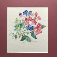 Original Watercolour of Sweet Peas