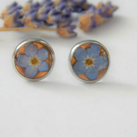 Forget Me Not Earrings Real Forget Me Nots and Resin Studs Myosotis Earrings