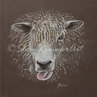 Limited edition Wildlife Print from original pastel drawing- Cheeky Sheep