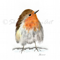 Limited edition Wildlife Print from original pastel drawing- Robin