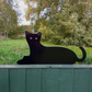 Metal Cat Fence Topper Garden Ornament - part of a collection of Metal Animals