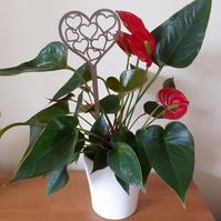Stainless Steel Plant Pot Heart Decoration Garden Long