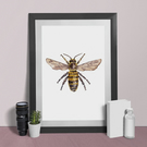 Honey Bee Print - Honey Bee Watercolour Print A4