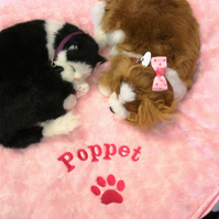 Dog blanket. Cat blanket. Rabbit blanket. Personalised with your pets name.