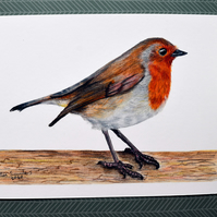 Robin A5 Print of Original Coloured Pencil Drawing British Bird Art
