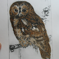 Tawny owl limited edition hand painted drypoint etching