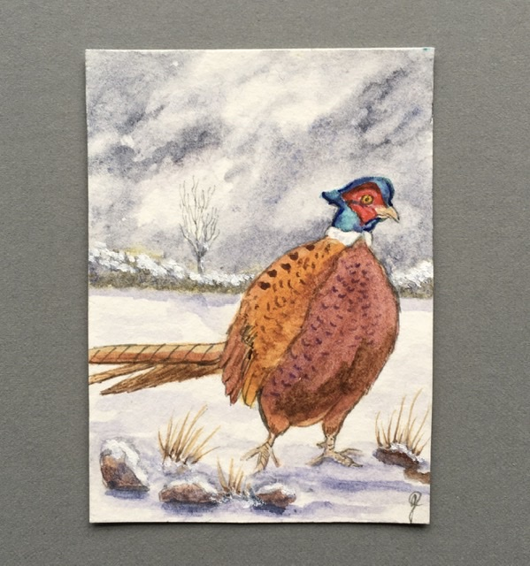 Winter Pheasant aceo
