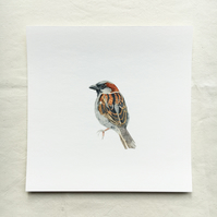 Watercolour sparrow giclée print