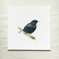 Watercolour starling giclée print