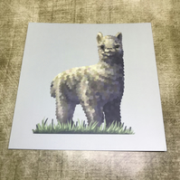 Alpaca Square Post Card