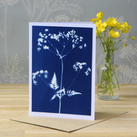 Cow Parsley Cyanotype Card No. 6