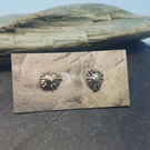 Limpet Stud Earrings