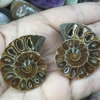 Beautiful Pair of Large Polished Ammonite Halves for Jewellery Making.