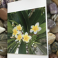 Plumeria Frangipani! Photographic Blank Greeting Card for all Occasions.