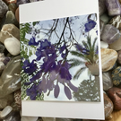 Purple Blue Jacaranda! Photographic Blank Greeting Card for all Occasions.