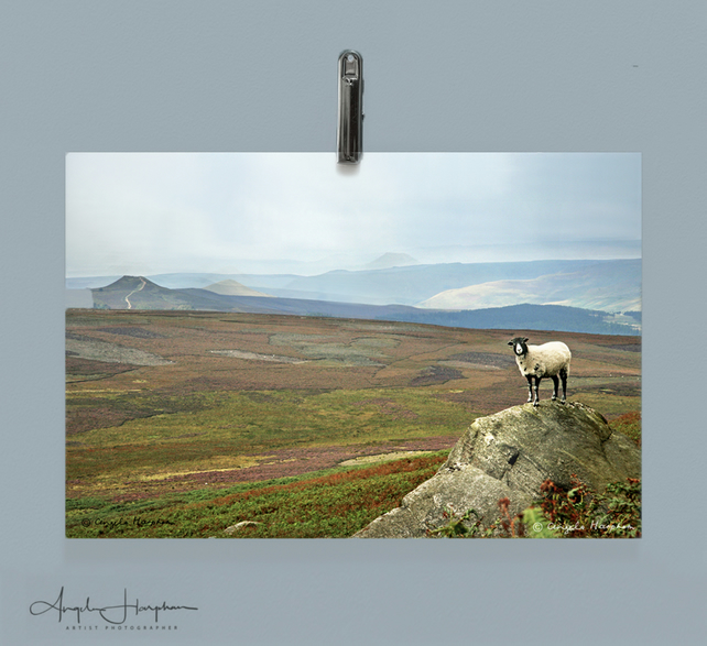 One Sheep Derbyshire Peak District Landscape Fine Art Photograph