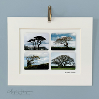 Unframed Colour Art Photograph - Wind Sculpted Trees Composite