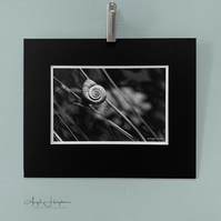 Small Photograph Fine Art - French Snail in Monochrome