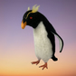 Needle felted Rockhopper penguin