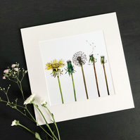 "'The Dandelion' 8"" x 8"" Mounted Print"