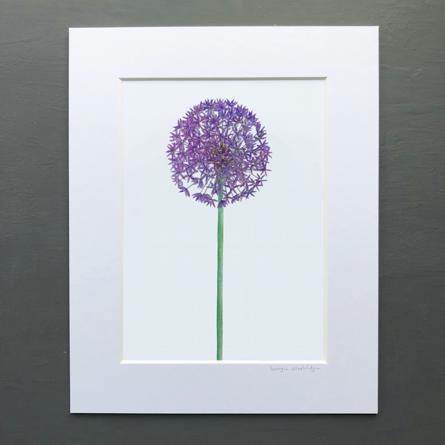 "'Allium' 8"" x 10"" Mounted print"