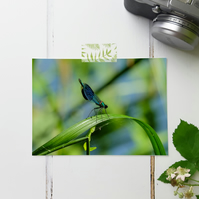 Damselfly, Fine Art Photography Print, Various Sizes Available