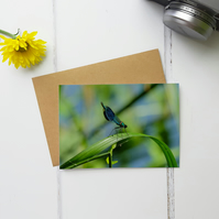 Damselfly Greeting Card, Fine Art Photograph, Two Sizes Available