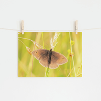Meadow Brown Butterfly, Fine Art Photography Print
