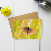 Meadow Brown Butterfly, Greeting Card, Fine Art Photograph, Two Sizes Available