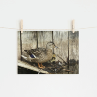 Mallard Duck and Baby, Fine Art Photography Print, Various Sizes Available