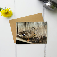 Mallard Duck and Baby, Greeting Card, Two Sizes Available