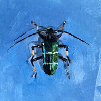 "Original Oil Painting of Long Horned Beetle 6"" x 6"" Entomology Art Insect"