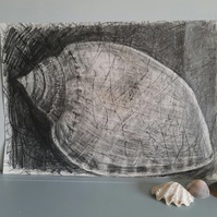Original pencil drawing of shell