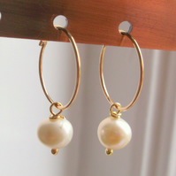 Gold Filled 15mm Hoop Earrings with Ivory Freshwater Pearl Drops