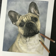 Beautiful French Bulldog, Original Portrait, Pastels, Pet Portrait, Artwork