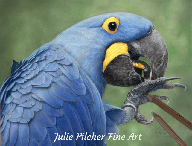 Hyacinth Macaw, Original Portrait, Pastels, Pet Portrait, Artwork 20 x 25 cm