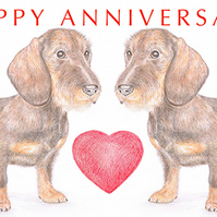Wire-haired Dachshunds -  Anniversary Card